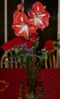 Lenes amaryllis and Richards roses